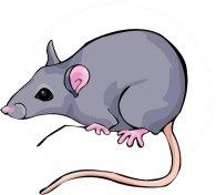 Bienvenue sur Thomas et les Intrépides rat